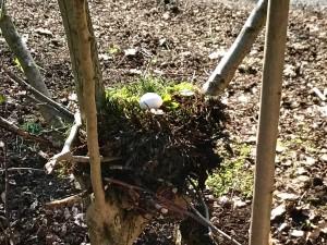 Nest bouwen-16-2